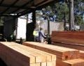 Hardwood Gluts