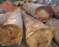 Marri Logs
