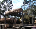 Unloading Log Trucks - A fine art