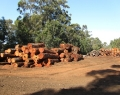 Middlesex Timber Yard